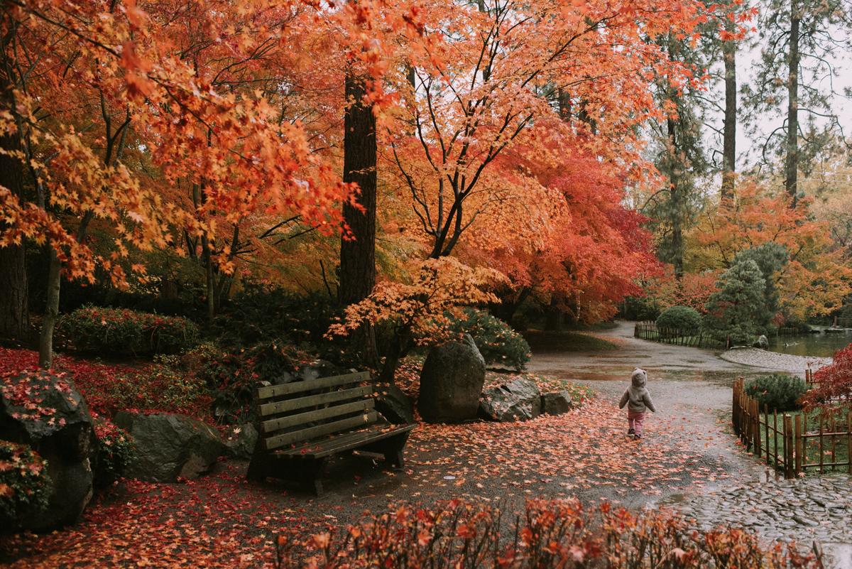 Manito park and nishinomiya tsutakawa japanese garden for Nishinomiya tsutakawa japanese garden koi